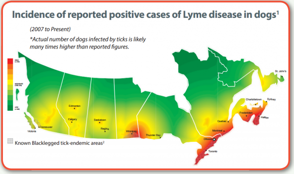 Ticks-in-Ontario Map