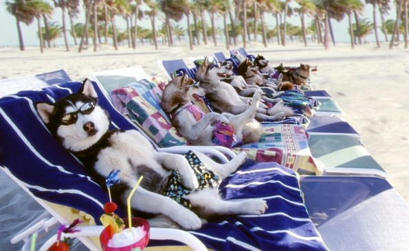 sunbathing_dogs[1]