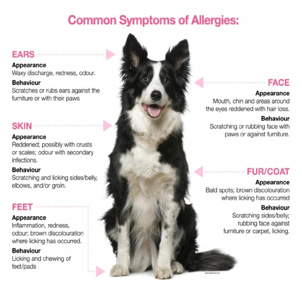 common signs of allergies