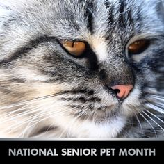 national senior