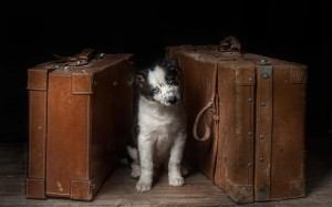 travel_black_blue_eyes_suitcase_dog_waiting_hd-wallpaper-1671719