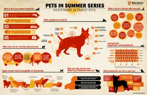 pets and heat stroke